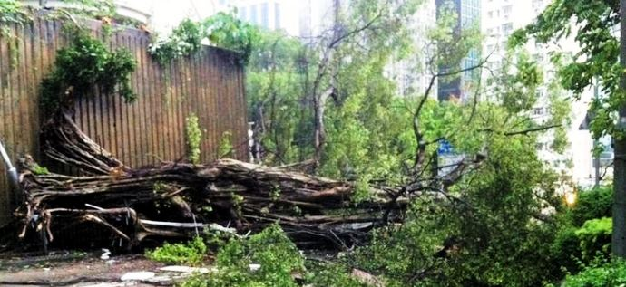 Typhoon Tree Failure