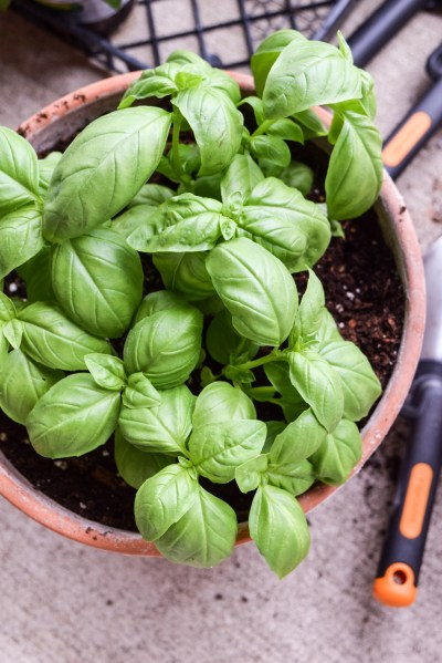 How To Start A Patio Herb and Vegetable Garden   A Simplified Life One of the best parts of spring is getting to put in herbs and vegetables   Having fresh ingredients on hand to use makes eating healthier so much  easier