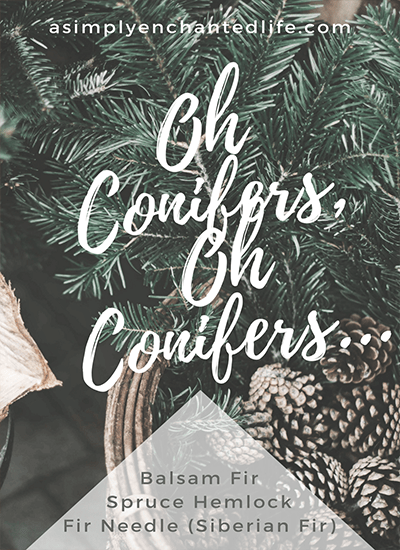Oh Conifers, Oh Conifers…|Aromatherapy