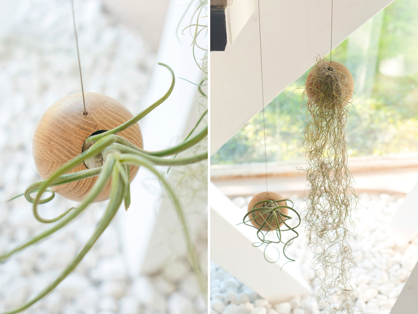 urban-jungle-bloggers-etairnity-airplants-6