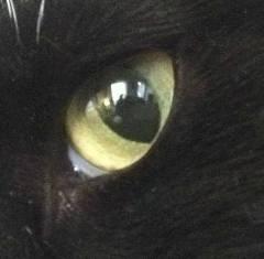 Calcium Deposits In Eyes Dogs