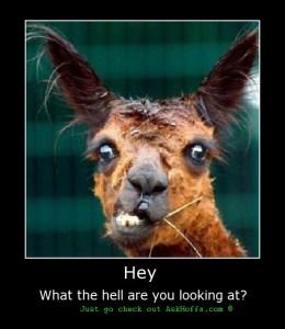 camel saying askhoffa.com