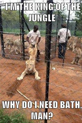 Create Meme Beautiful Pictures Cubs Lion Photos Animal Cubs
