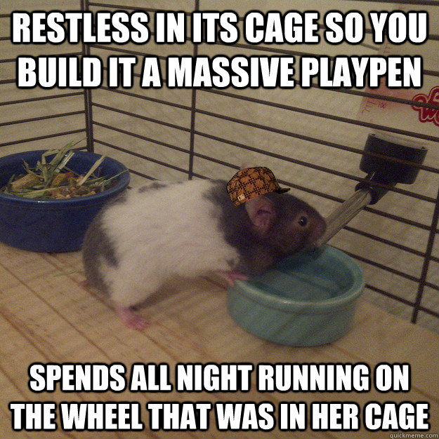 Which Hamster Breed Is Best For Kids Hamster Guru