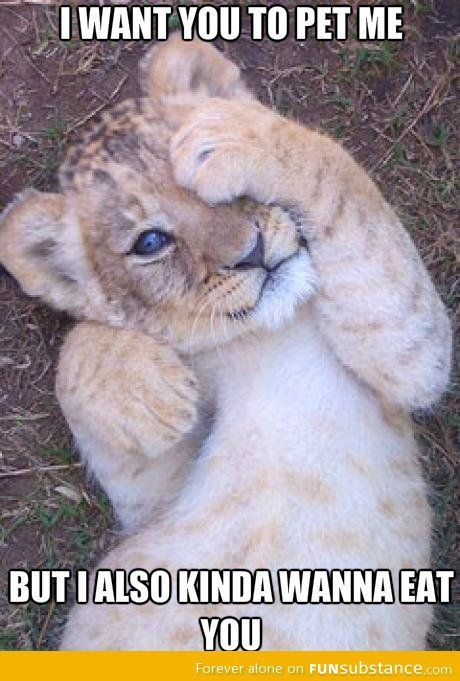 Good Guy Lion Saves The Day By Rajaei Meme Center