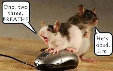 25 Most Funniest Mouse Meme Pictures And Images Of All The Time