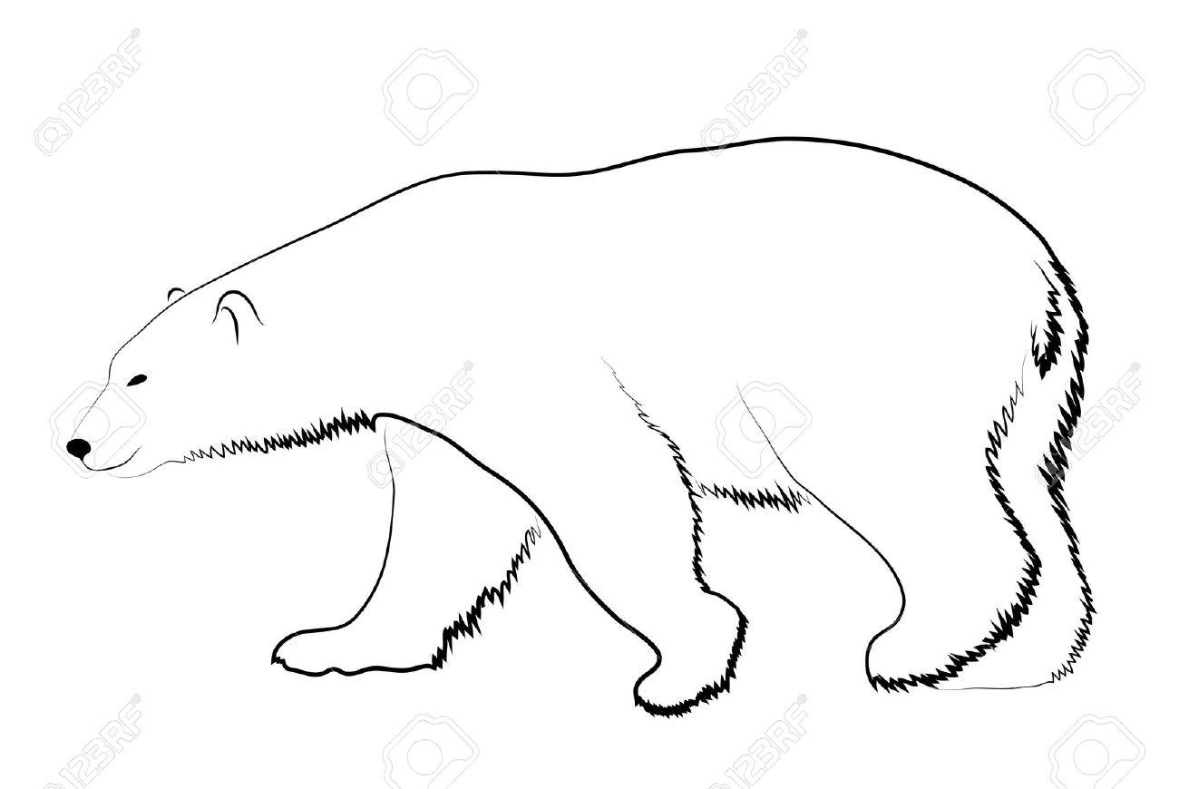 Polar Bear Face Clipart Sketch Coloring Page