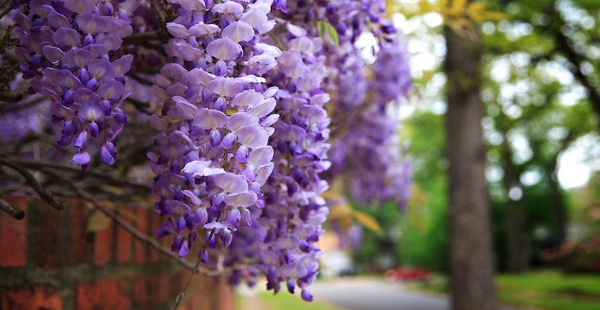 Outdoor Flowering Plants