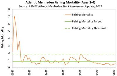 Atlantic Menhaden