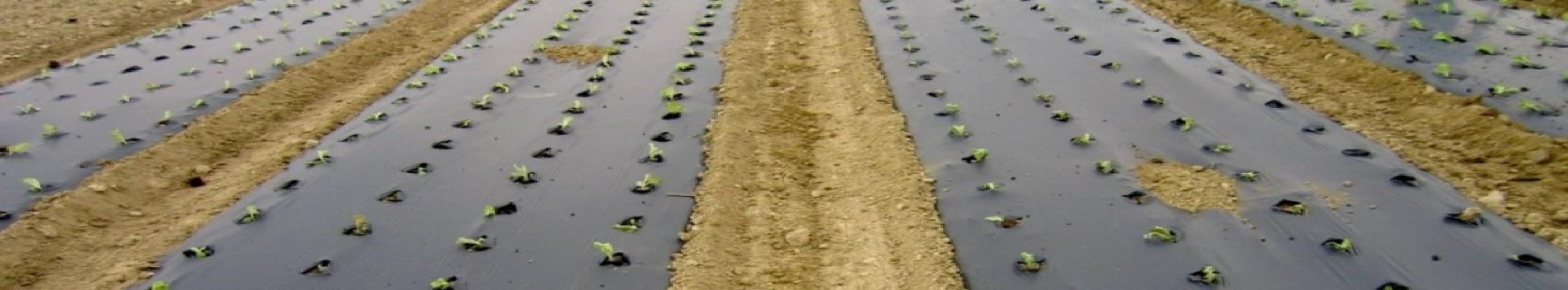 El Parlamento Europeo apoya el uso de film biodegradable en agricultura
