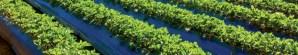 El Estado de California aprueba los acolchados biodegradables en suelo certificados según la norma EN 17033