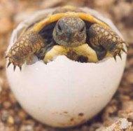 Resultado de imagen de tortugas moras