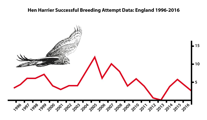 Gaining A Better Understanding Of Hen Harrier Behaviour To