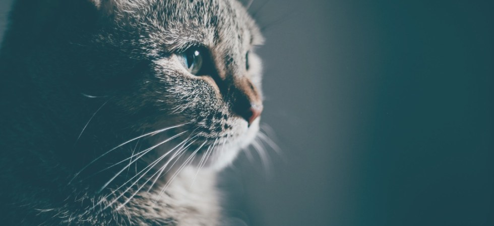 Abitanti Madrid gatos - aspassoperlaspagna.it