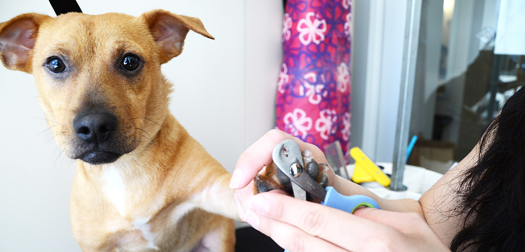 Dog Grooming Tips ASPCA