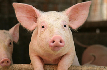 Image result for farm animal pictures