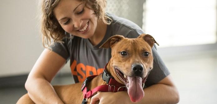Image result for adopting a pet