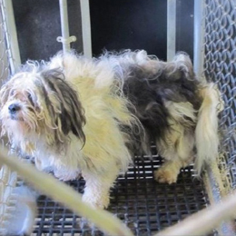 Adult dog with overgrown, matted fur at puppy mill
