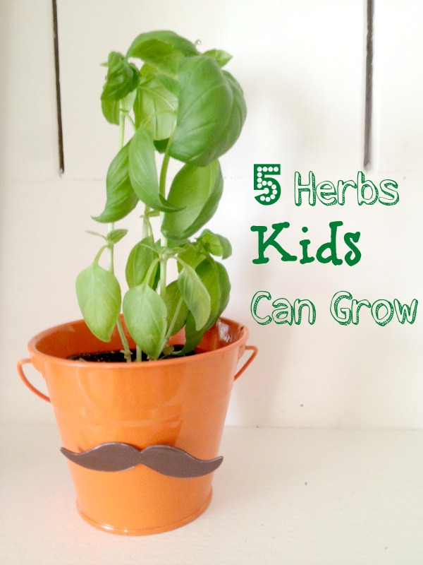 5 Herbs That Are Easy Enough For Kids To Grow