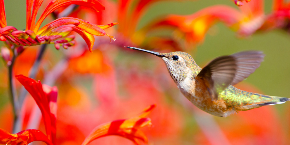 Attract Bees, Butterflies, and Hummingbirds to Your Garden