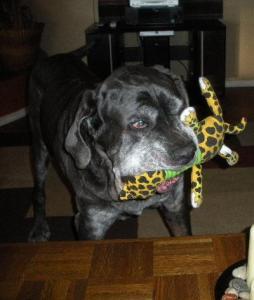 Neo Mastiff toy winner