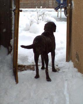 Neo Mastiff in snowy gateway