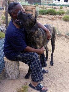 Man and Great Dane puppy hugging