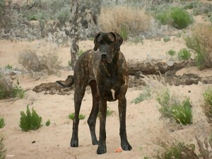 Digitalized painting of Great Dane from photo
