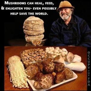 Mushroom support
