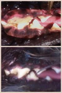 Dogs_Teeth