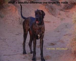 Beautiful_Difference