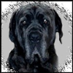 Framed drawing of Shadrach the Neo Mastiff