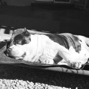 CCL Tears in Dogs – Our Personal Journey, Pt 2