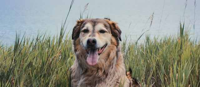 Flea & Tick Products – Poisoning More than Pests