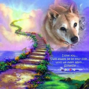 Farewell from Carolina Dog