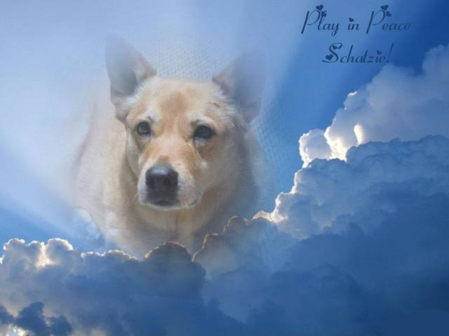 Heavenly pose for a heavenly dog