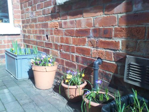 Lots of potted flowers against a brick wall