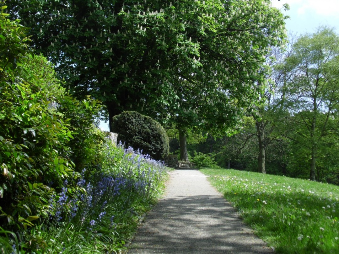 Bluebells and Horse Chestnut