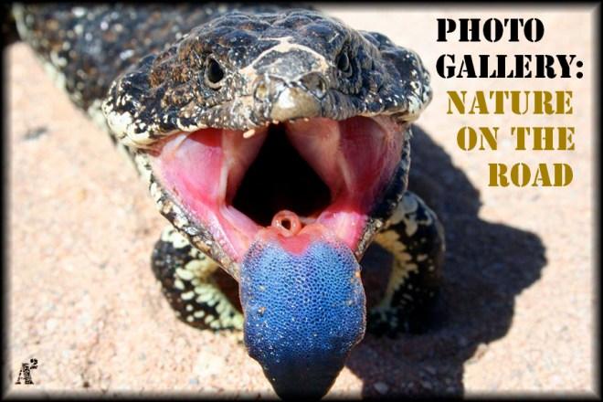 blue tongue cover