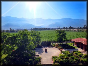 maipo vineyards