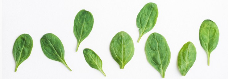 Immunity-Booster Foods Spinach