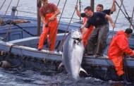 البرلمان يعطي الضوء الأخضر للسفن الإسبانية بالعودة للصيد في للمياه المغربية