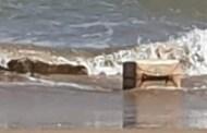 الحشيش على شاطئ