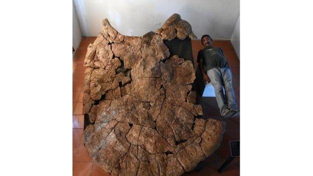 العثور على حفرية سلحفاة بحجم