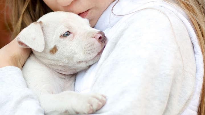 Dogs May Help To Protect Children From Developing Eczema And Ease Symptoms Of Asthma