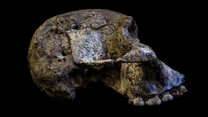 Australopithecus Teeth Reveals They Breastfed Children For Years As A Means Of Survival