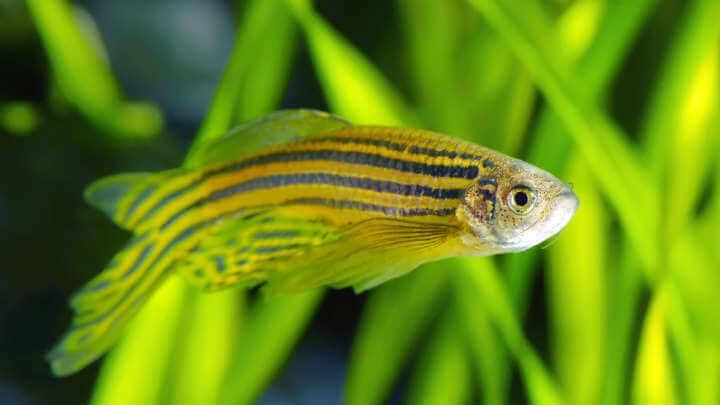 Fish-Human Hybrid Hormone Receptors Reveal How Animals Left The Oceans