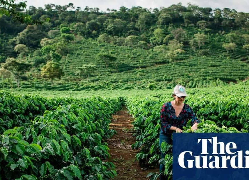 $1m a minute: the farming subsidies destroying the world – report
