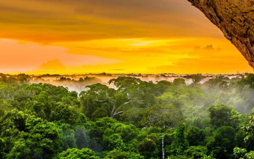 The Amazon Rainforest Is On Fire. Here's How You Can Help. | Betches