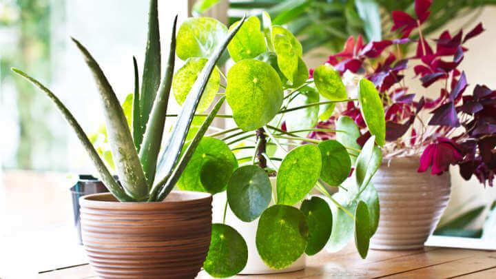 Sorry, But Indoor Potted Plants Dont Actually Improve Air Quality